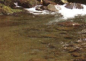 偏光サングラス釣りは、太陽光の乱反射をカットすることで快適な視生活が送れます。