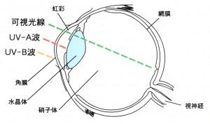 スポーツにおける紫外線、青色光から目を守るスポーツ用サングラスは重要です。