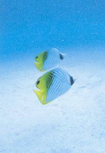 ダイビングマスク度付きの製作は、水中と水上での見え方を考慮して度数を決定