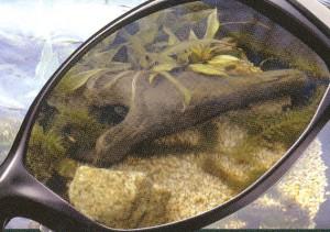 釣り&フィッシングどきに適した釣り用サングラスは偏光レンズ仕様のサングラスがお奨め。