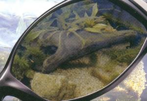 バス釣りどきに適したバス釣り用サングラスは偏光レンズ仕様のサングラスがお奨め。