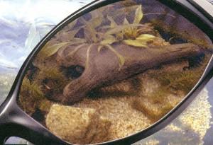 つりどきに適した釣り用サングラスは偏光レンズ仕様のサングラスがお奨め。