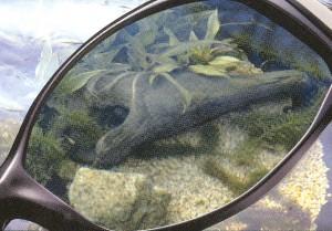 水面のギラツキをカットできる釣り時に適したサングラスのお奨めは偏光サングラスです。