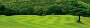 ゴルフどきのスポーツ用サングラスは集中力を高める効果が期待できます。