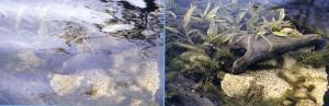 ルアー釣りどきに適したほんとうの偏光サングラスのご紹介