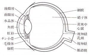 サッカー保護眼鏡子ども用