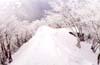 スキー、スノーボード等のウィンタースポーツ時に偏光調光レンズを装用することで雪面での視界がクッキリ
