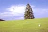 偏光調光レンズはゴルフ時の乱反射光を抑えることで芝目が読みやすい